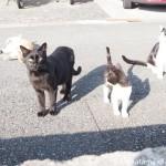 【若松区】新聞販売店の仲良し猫さんたち