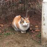 【大久保】公園の猫さんたち