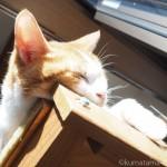 20年物のキャットタワーで眠る猫