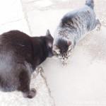 【文京区】頭をスリスリする白山神社の猫さんたち