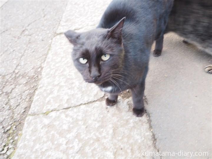 エンジェルマークがある黒猫さん