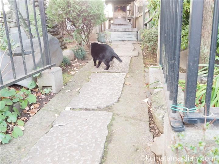 立ち去る黒猫さん