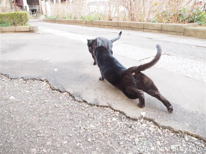 伸びる黒猫さん