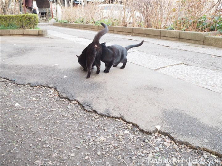頭スリスリ黒猫さん
