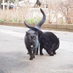 【文京区】白山神社の胸に白いハートがある黒猫さん