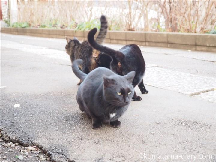 黒猫さんたち