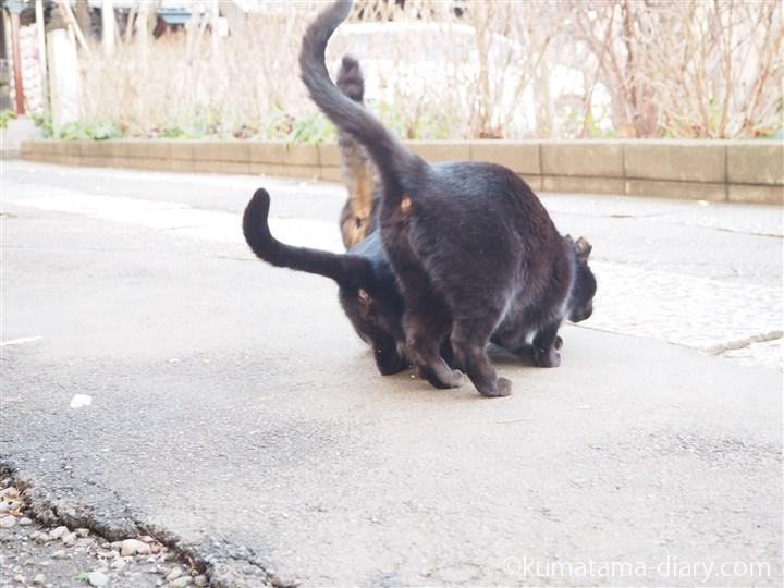 しっぽが長い猫さんたち