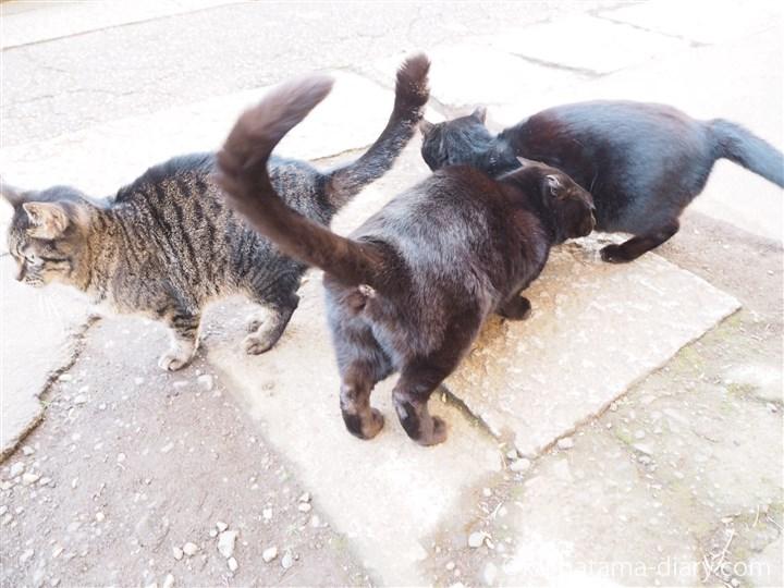 3匹の猫さん