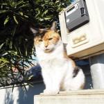 【文京区】電柱横のボックスの上にいた三毛猫さん