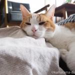 陶器の湯たんぽにあごのせする猫