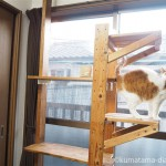 【DIY】2階の窓にも「LABRICO(ラブリコ)」でキャットウォークを作りました
