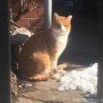 【大久保】雪が残る公園の猫さんたち