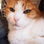 飼い主と性格がそっくりな猫