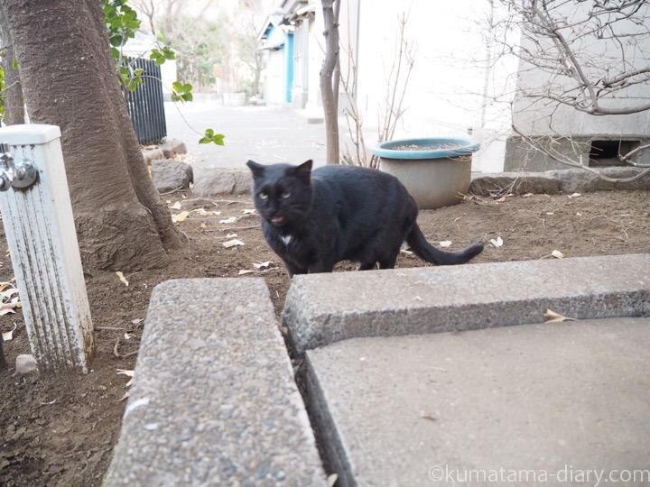 胸にハートがある黒猫さん