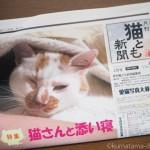 『月刊猫とも新聞』2018年2月号の特集は「猫さんと添い寝」です