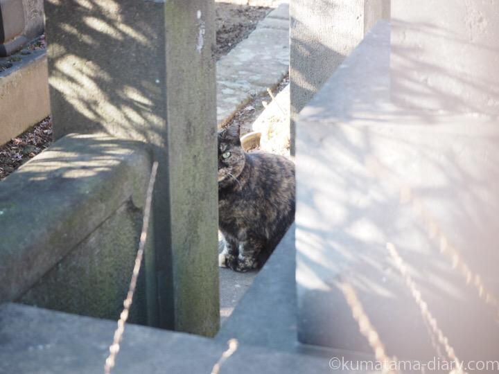 サビ猫さんは見た