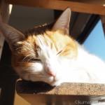 2階のキャットウォークで前足にあごのせする猫