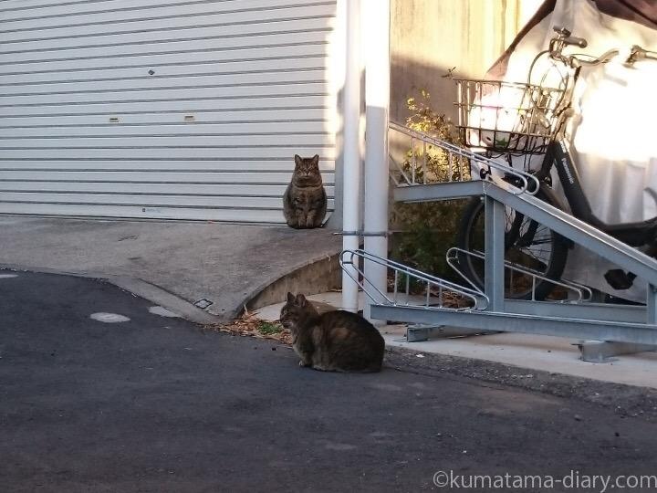 キジトラ猫さん2匹