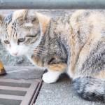 「東池袋中央公園」の横断側溝の中で遊ぶ三毛猫さん