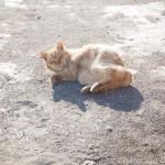 【文京区】駐車場でひなたぼっこする茶トラ猫さん