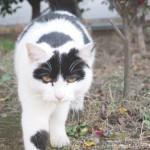 【池袋】個性的な模様の白黒猫さん