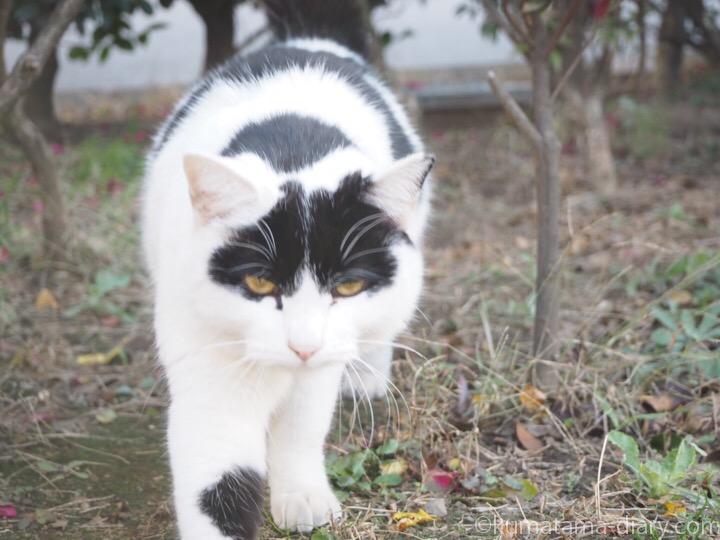 白黒猫さん
