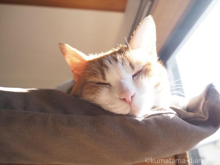 たまき寝顔