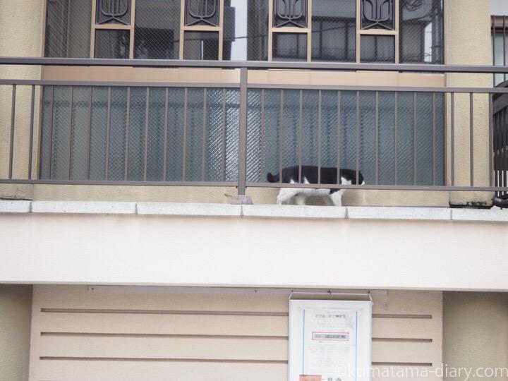 お寺の黒白猫さん