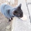 エサを食べる黒猫さん