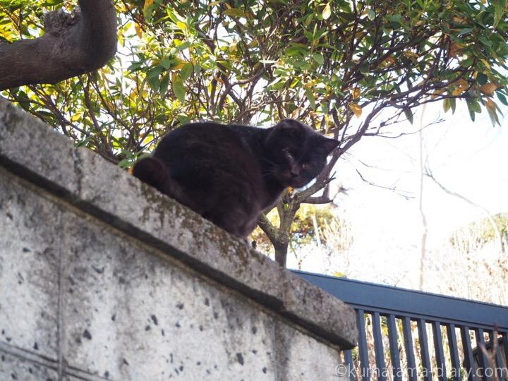 塀の上の黒猫さん