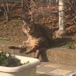 【大久保】花壇でひなたぼっこする猫さんたち
