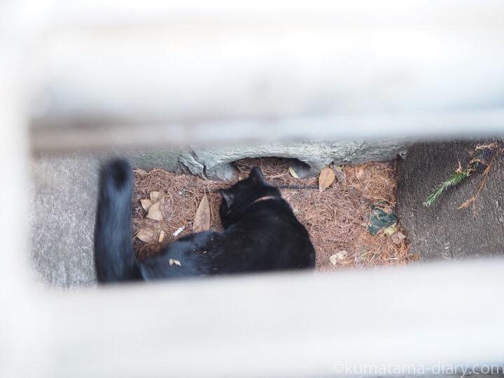 横断側溝の中の黒猫さん