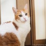 颯爽と階段をのぼる猫【動画】