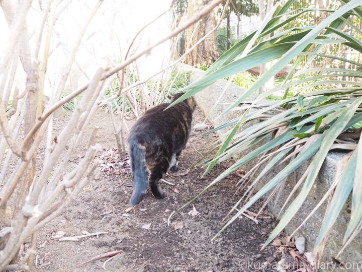 立ち去るキジトラ猫さん