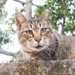 OLYMPUS DIGITAL CAMERA塀の上のキジトラ猫さん顔
