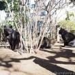 黒猫さん2匹とキジトラ猫さん