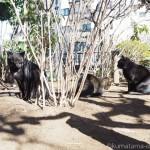 白山神社でひなたぼっこをする3匹の仲良し猫さん