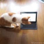 すごく食いつきが良い!猫が見るテレビ「Cat TV 3 – Television for Cats」