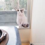 【青山】TOBICHIでやさしいねこ「ぽー」の写真展を見ました