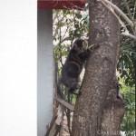 【文京区】「白山神社」で木登りする猫さんを見ました