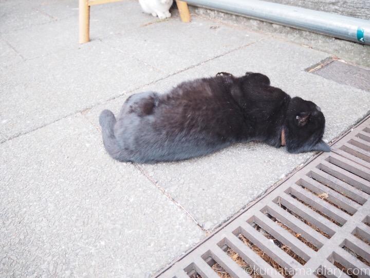 寝転がる黒猫さん
