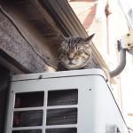 【大久保】室外機の上のキジトラ猫さん