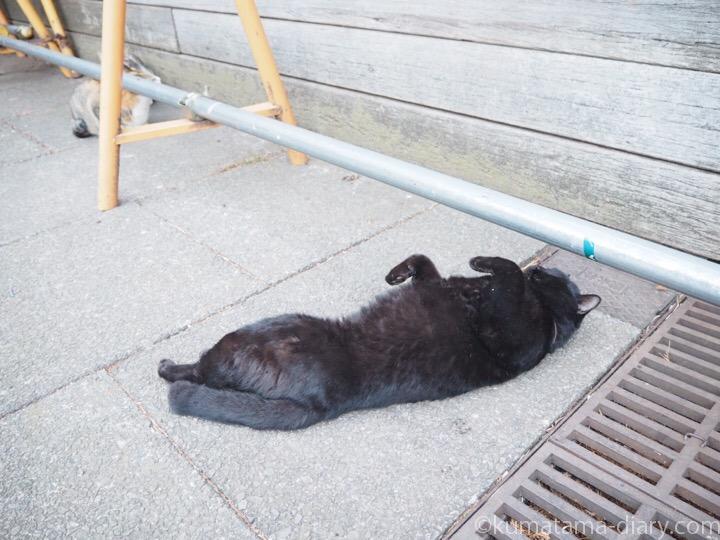 転がる黒猫さん