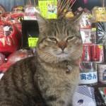 【柴又】土産物店のかわいい看板猫さん