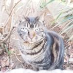 【文京区】「白山神社」の木登り猫さんに大接近