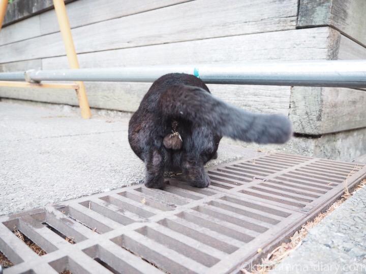 黒猫さんにゃんたま