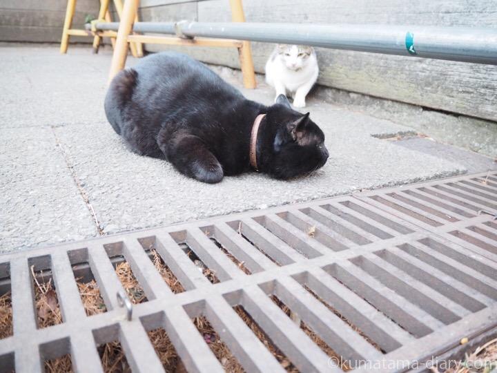 地面に座り込む黒猫さん