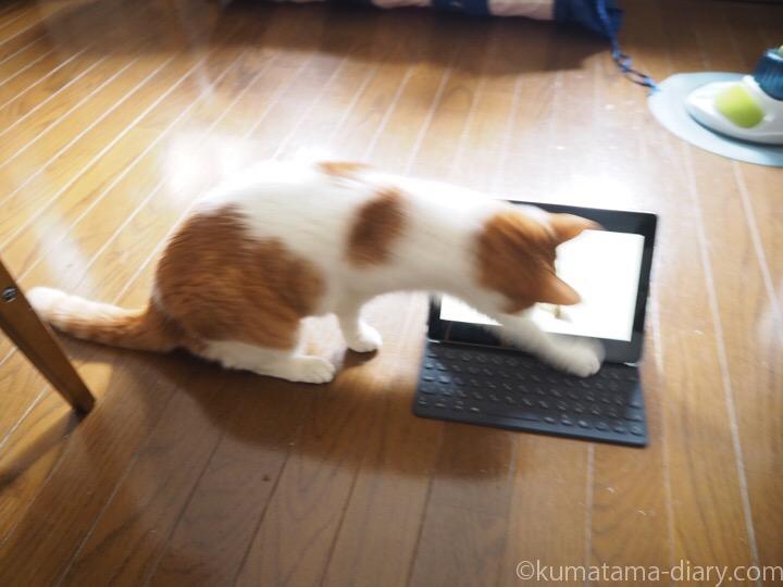 Cat TVとたまき