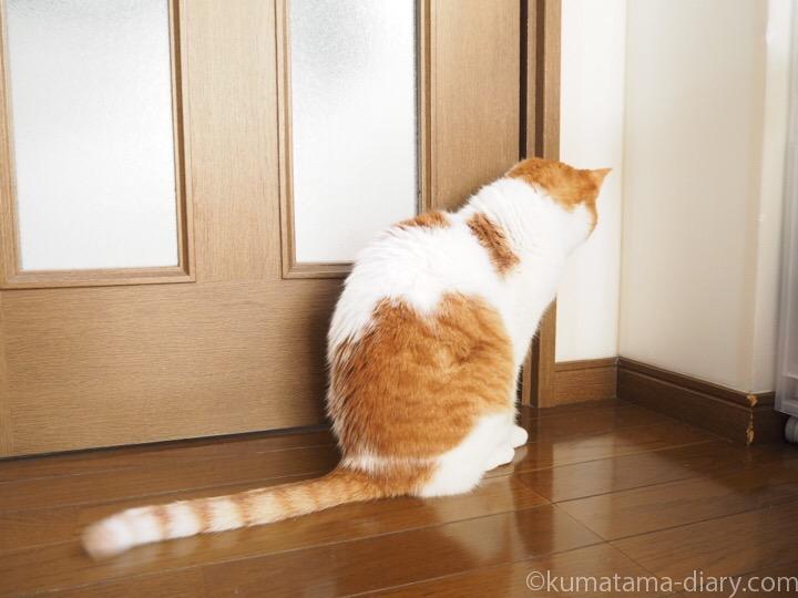 ドアの前のたまき
