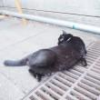 寝転がる黒猫さんのにゃんたま